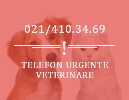 Poza-1-Contact-Biovet-Impex