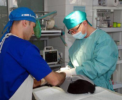 Chirurgie-Generala-Clinica-Veterinara-Biovet-Impex-compressor