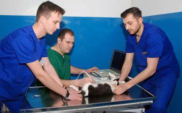 Examen-Imagistic-Clinica-Veterinara-Biovet-Impex-360-x-225-px-compressor
