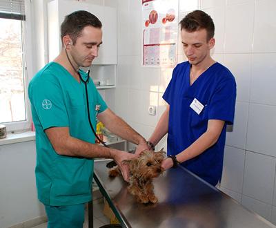 Medicina-Interna-Clinica-Veterinara-BioVet-Poza-1