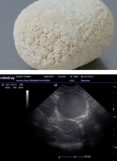Clinica-Veterinara-Biovet-Urologie-Poza-1-compressor